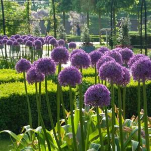 Allium Leef! Interieuradvies