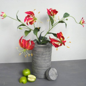 Flame lily- Gloriosa Superba