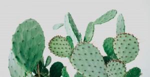 kaktuskbh-DK Leef! Interieuradvies