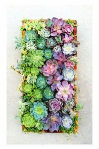 verticale-vetplanten Leef Interieuradvies